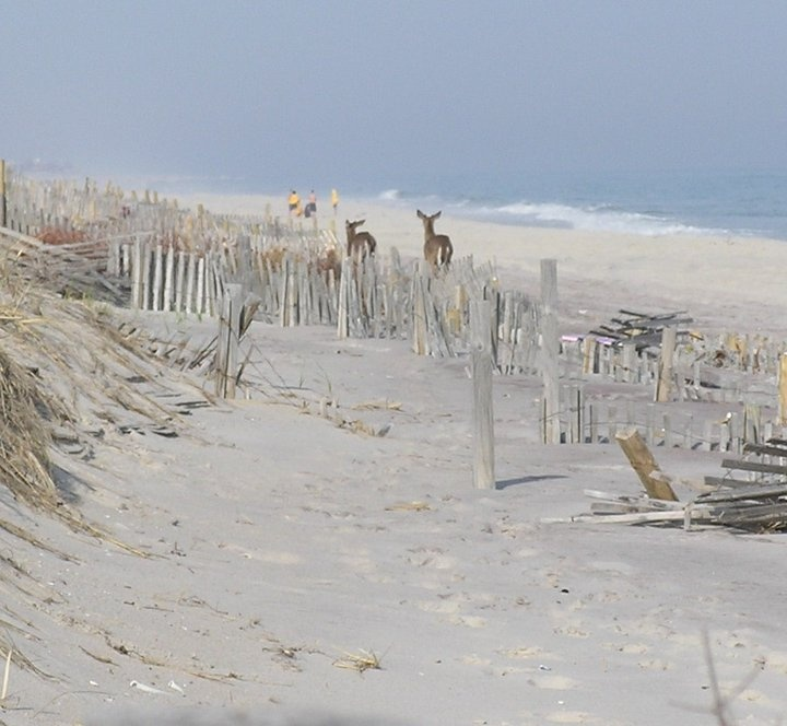 Fire Island Ny: Village Of Kismet, Fire Island, NY On