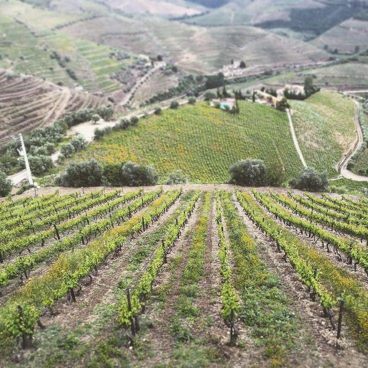 Day 4 São João da Pesqueira... #portugal #traveling #armandorafaelphotogrpahy #travelphotography #travel #douro #dourovalley #winecountry #portwineroute #rotadovinhodoporto @printmatter by armandorafael18