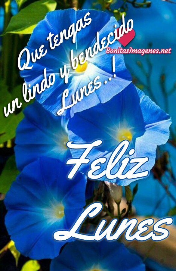 Feliz Lunes Imagenes Con Frases Bonitas Feliz Lunes Buenos