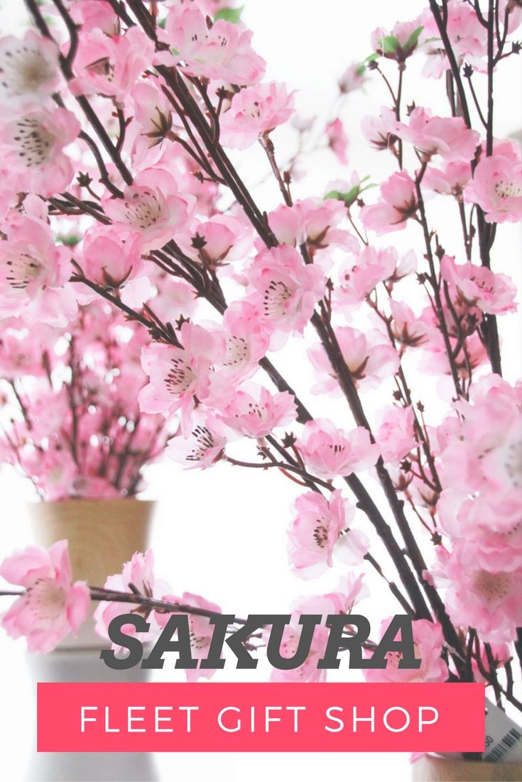 The Meaning Of Cherry Blossoms In Japan Runs Deep Making The Country S National Flower A Cultural Icon Rever Cherry Blossom Japan Gift Shop Organization Gifts
