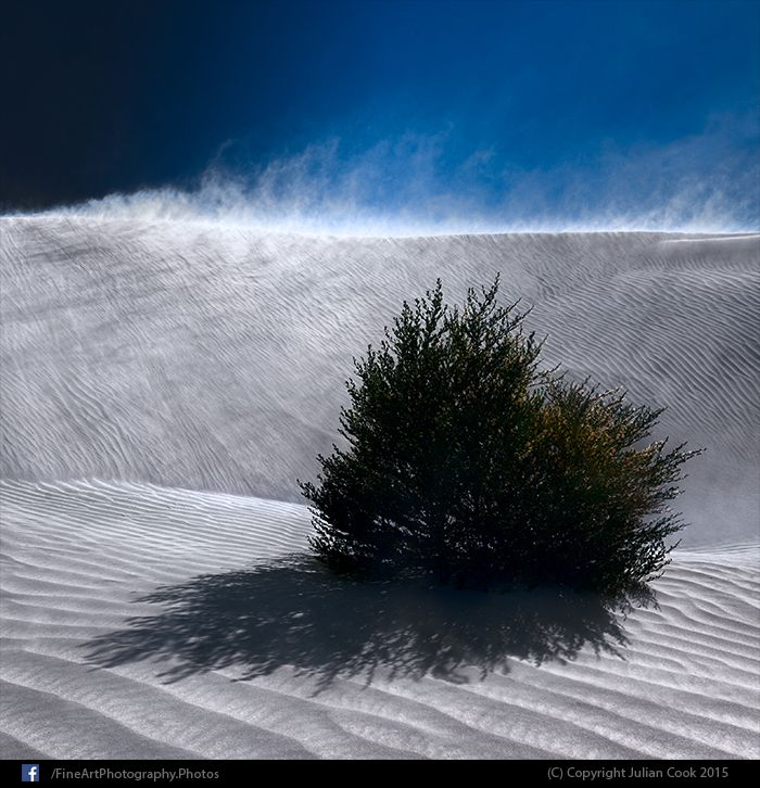 #Sand blowing in the #wind in the Nambung National Park with a bush in the foreground.