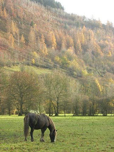 Horse in the Ceiriog Valley