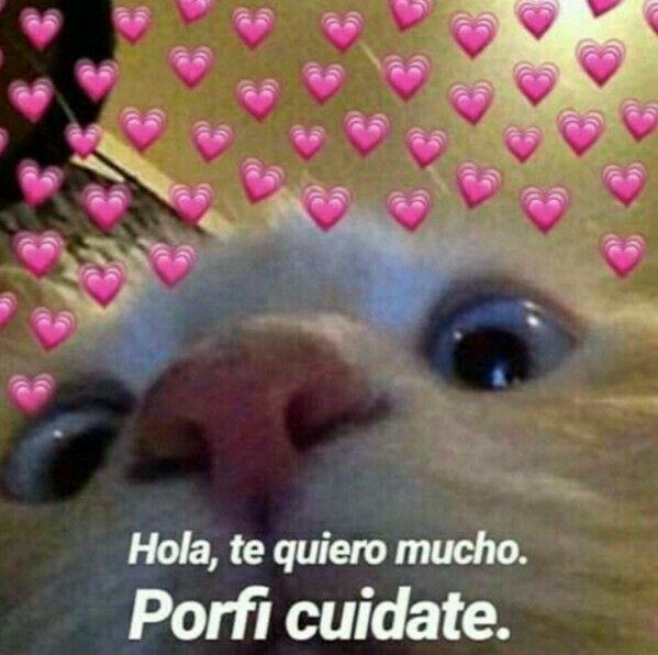 Hola Porfa Cuidate Memes De Amor Con Gatos 3 Memes Lindos Meme Gato Memes Divertidos