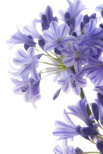 Comece o dia lindo como esta flor... e o seu dia pode ficar ainda melhor com uma hidromasagem. Visite o site e conheça toda a nossa linha de produtos: www.acqualifehidro.com.br Acqua Life Hidromassagem. A vida merece saúde e prazer!