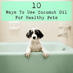 10 Ways To Use Coconut Oil For Healthy Pets