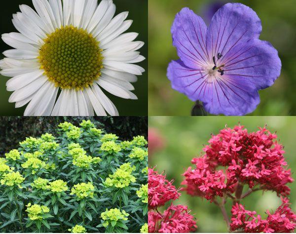 99 best low maintenance plants images on pinterest for Best low maintenance plants