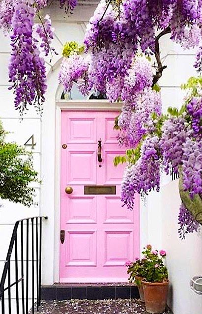 Pink door with wisteria in Notting Hill, London, England.