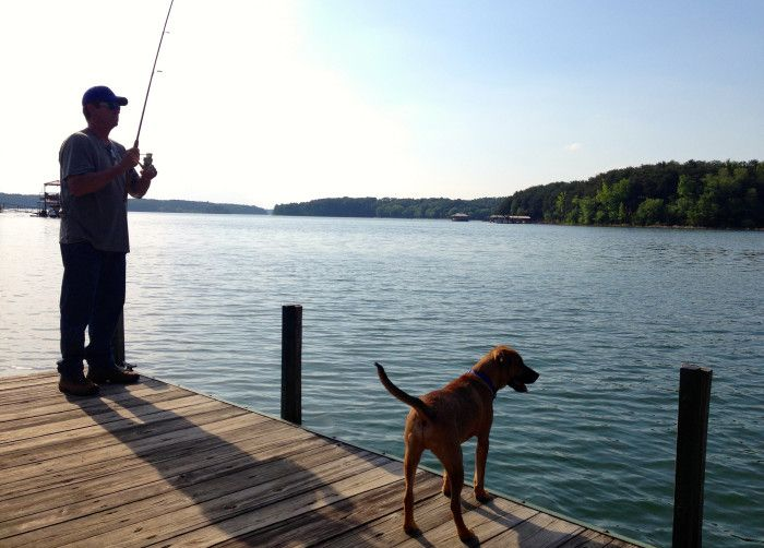21 best ideas about state parks on pinterest lakes for Lake hartwell fishing hot spots