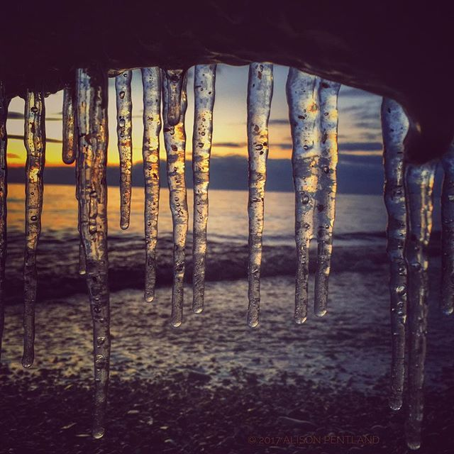What at first glance looks like Birch trees are the reflection of sand and sunrise in Winter icicles.