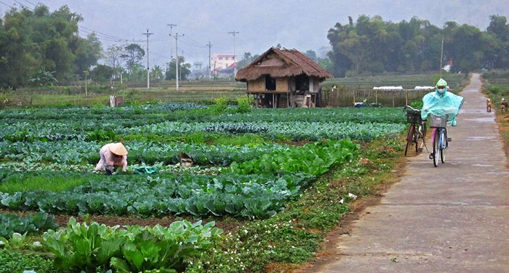 Mai Chau. #vietnam #maichau #field #agriculture #travel