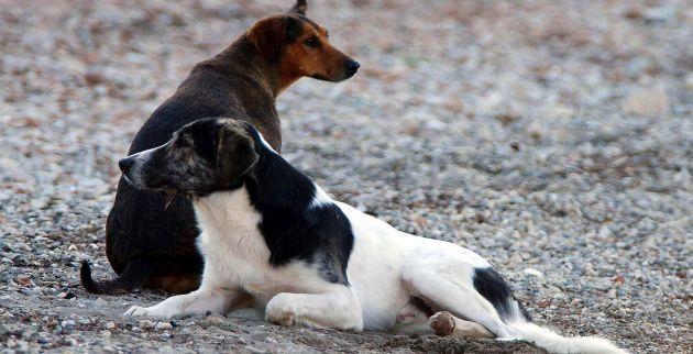 Γηροκομείο για σκύλους!