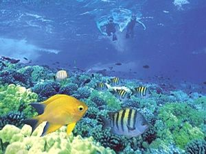 Snorkeling in maui the best places i 39 ve been for Fish bowl maui