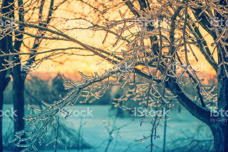 Icy Branches in the Glow of a Sunset - Retro royalty-free stock photo