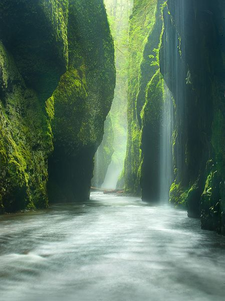 """""""Rainforest Canyon."""" Taken in Oneonta Gorge, Oregon. Apparently it's just a few miles east of Multnomah Falls on the historic highway. The hike is great for all ages that can walk and it's about a half mile, but straight up a river and has a cool log jam. The canyon only gets about an hour of daylight to the floor, so if you want any warmth, start the hike at 11:45-12:15ish. There's a giant waterfall at the end, with a pool you can swim in."""