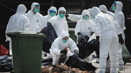 Epidemie de gripă aviară în Franţa. Peste 360 de mii de rațe vor fi sacrificate