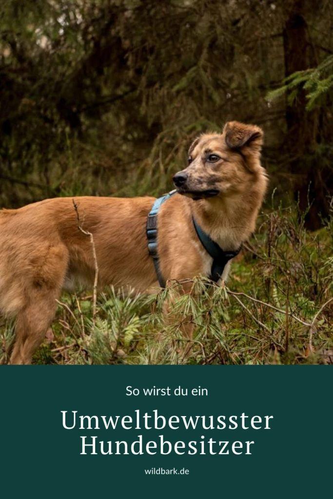 4 Tipps Um Ein Umweltbewusster Hundebesitzer Zu Werden Hunde Hundebesitzer Haushund
