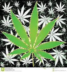marihuana - Szukaj w Google