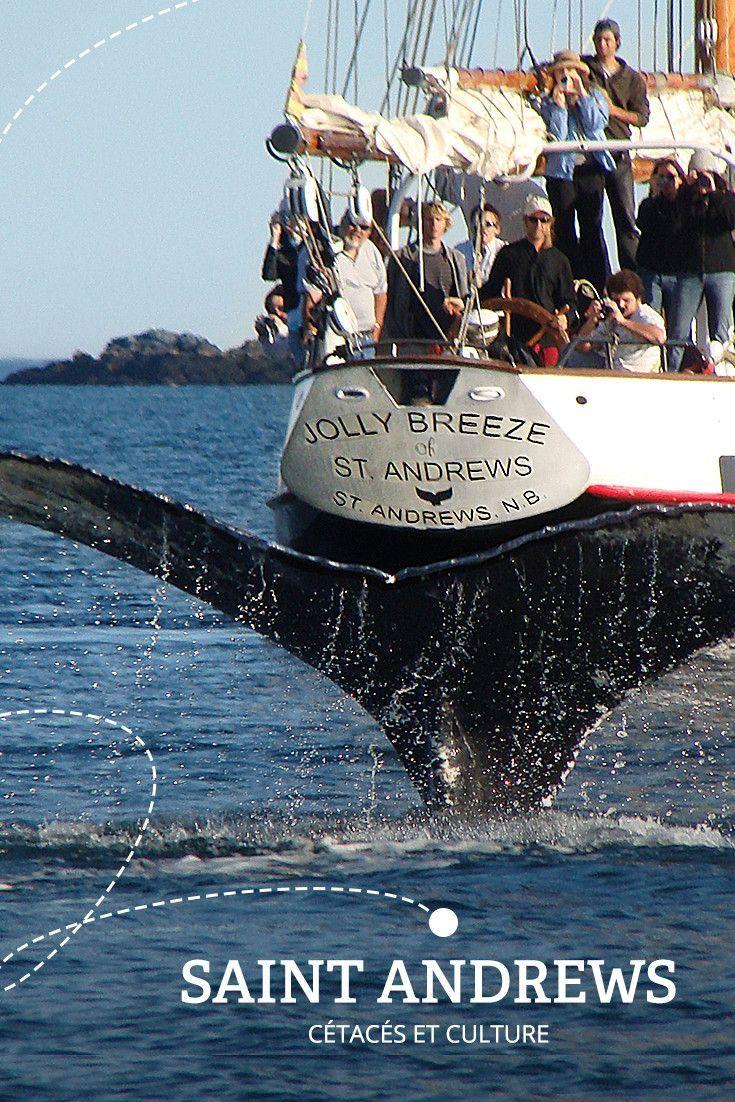 Des baleines et des îles   Arrêt no 4 - SAINT ANDREWS : À la fois centre de villégiature, d'aventure et d'observation de baleines, la ville de Saint Andrews se dresse sur une péninsule dans la baie de Fundy.
