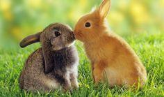 El día 4 de octubre se celebra el Día Mundial de los Animales. Lo que comenzó como una celebración religiosa, es especial, de bendición de los animales de