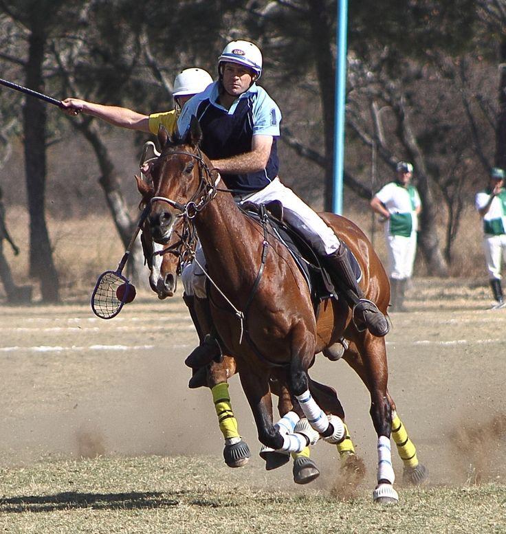 #polocrosse #horses