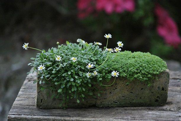 brick planter - looks like seaside daisy on the left. Must try it!