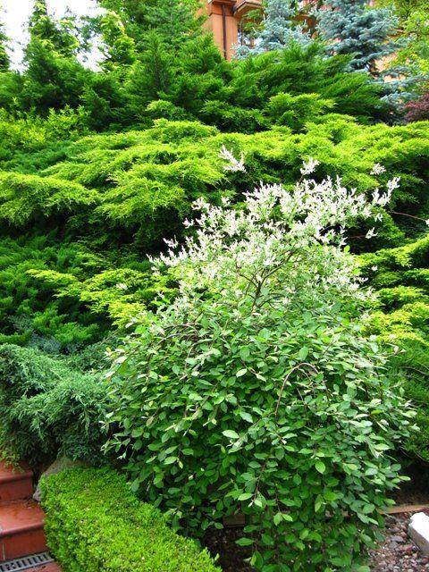 Эва в саду: Терраса Сад - Прекрасный сад на склоне в июне