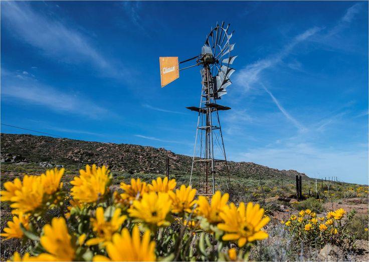 Windpomp, Matjiesfontein, Namaqualand, South Africa