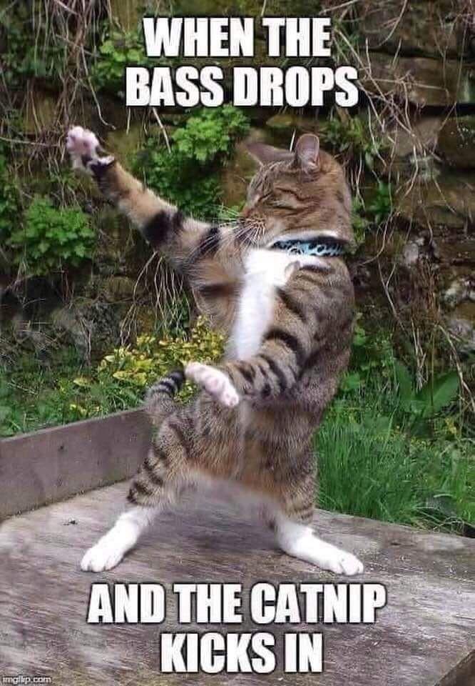 Feel The Beat Animal Jokes Cute Cat Memes Funny Cat Memes