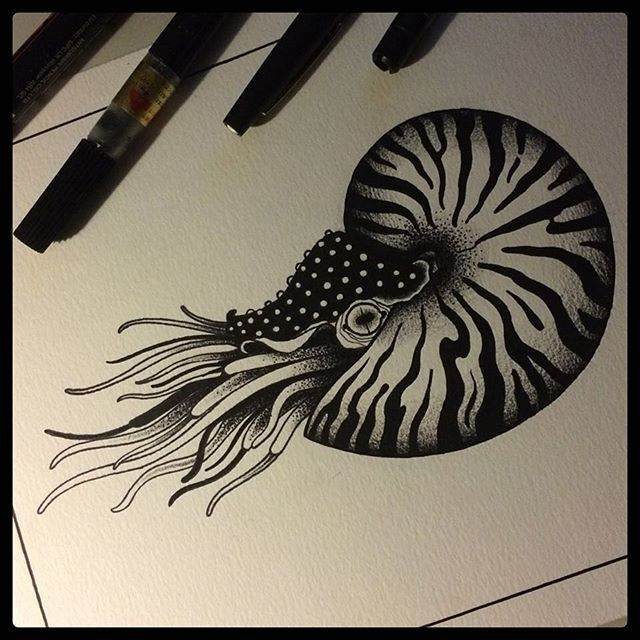 #nautilus #tattoo #tattooflash #tattoolife #blacktattooart #blacktattoomag