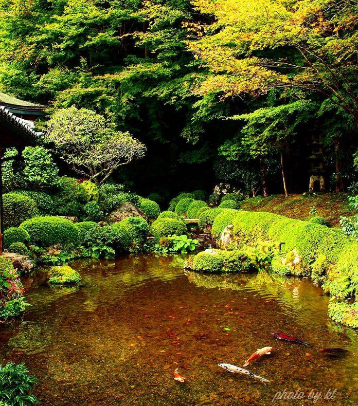 大原 寂光院  少し色づきはじめているように見えました  #Jakkoin temple/ #Kyoto Japan  Thank you for viwing  Have a nice day♪  #京都 #寂光院#maple #苔 #寺社仏閣 #紅葉 #お写んぽ #ファインダー越しの私の世界 #リフレクション#lovers_nippon#instalike #pic_groups#igersJP#special_spot_ #world_bestnature #nature_special_ #japan_daytime_view #ptk_japan#special_zipangu_#bestphoto_Japan#photo_jpn#PHOS_JAPAN #japan_of_insta #retro_japan_#total_blackgreen#green_creative_pictures#奥行き同盟#けしからん風景