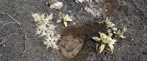 26 bin yıllık ayak izleri yok oluyor