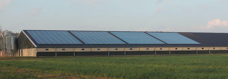 Afbeeldingsresultaat voor koeienschuur met zonnepanelen