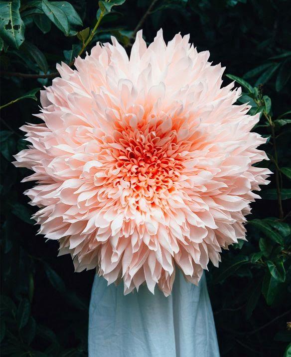 Tiffanie Turner's GIANT paper flowers                                                                                                                                                      More