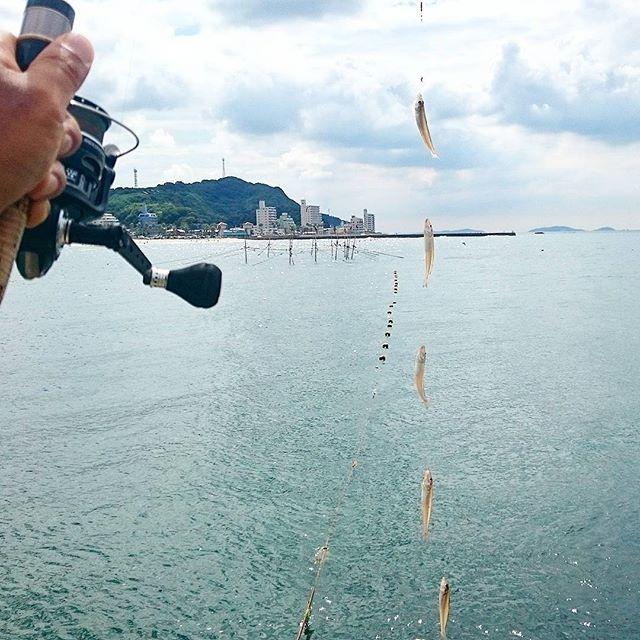 【bariborifishing】さんのInstagramをピンしています。 《Give me FIVE !  #バリボリ #釣り #fishing #フィッシング #angler #キス #連掛け #海 #sea #ocean #キス釣り #sillagojaponica #5連掛け #シロギス #魚 #fish #アウトドア #outdoor #outdoors #instamoment #instaphoto #instapic #instafish #instafishing #instagood #instanice #nice #five #5》