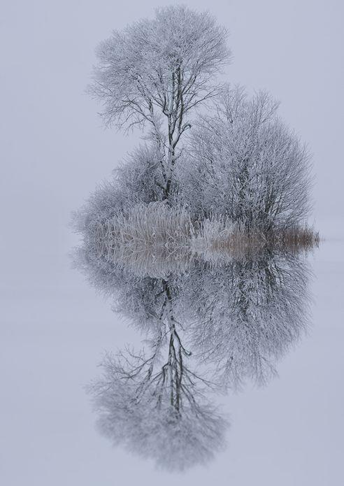 Snowy reflection.
