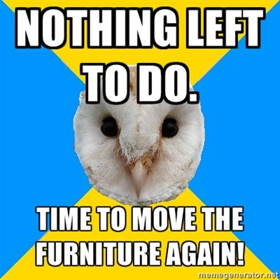 Bipolar Owl on manic furniture rearranging.  It happens.  Usually at night.