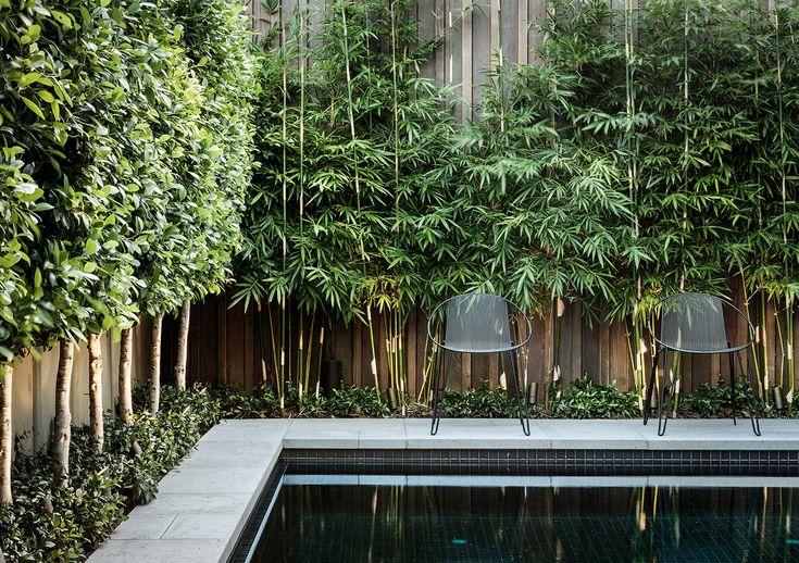 bamboo || nathan burkett landscape architect | residential garden, malvern melbourne