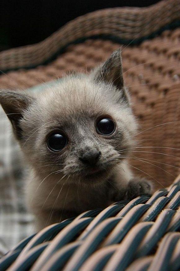Sad little kitty eyes