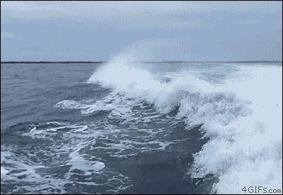 El desván del Freak: Colisión de delfines (ANIMACIÓN)