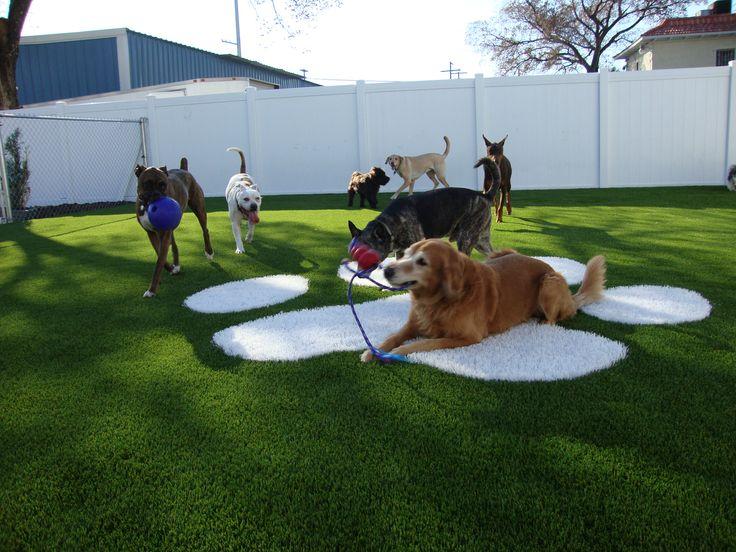 San Diego Dog Kennel Day Care