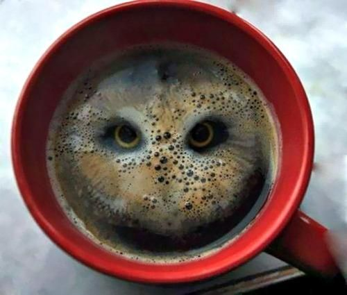@anilkohli54 something in the coffee