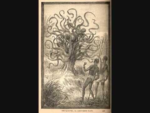 Cryptids and Monsters:  The Man-Eating tree - YouTube