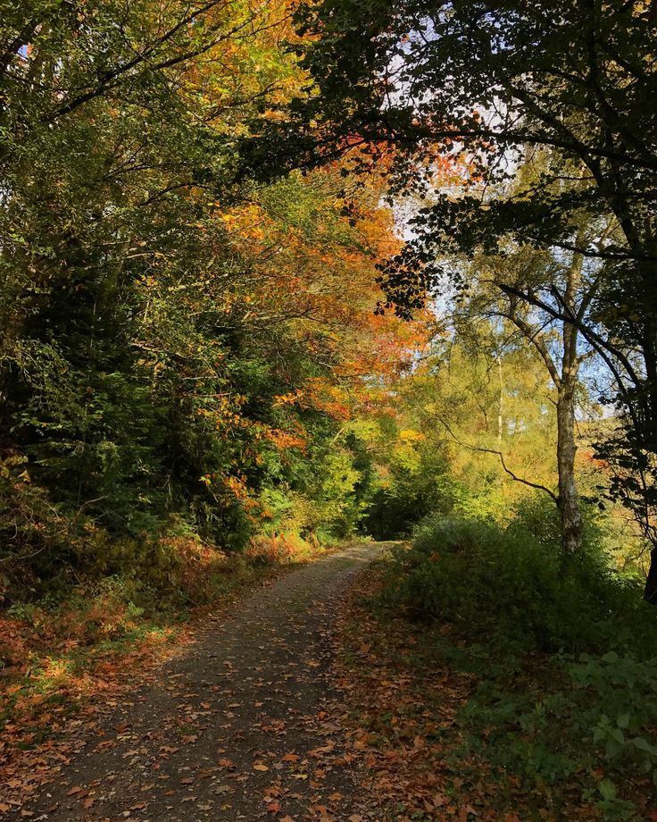 Beautiful woodland walk in Autumn here in South Shropshire | #autumn #shropshire #autumncolors