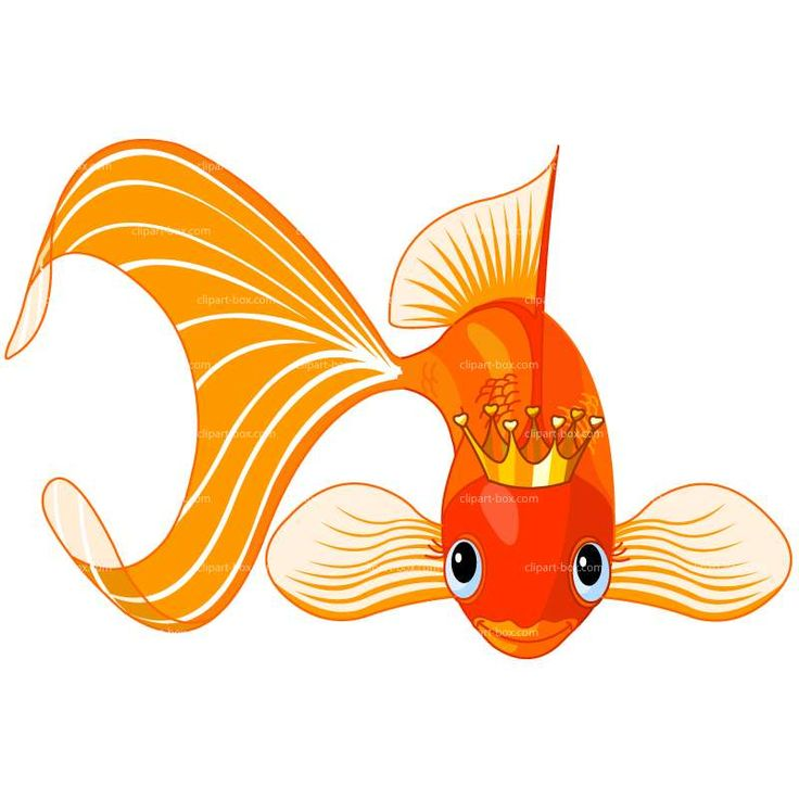 CLIPART KING FISH Royalty free