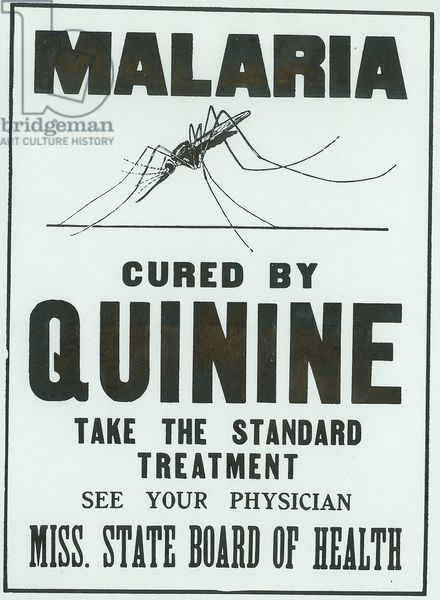 Image result for malaria can be cured with quinine