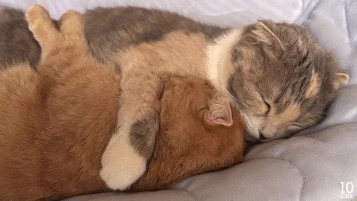 cats hugging gif