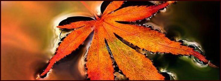Fall ~ facebook cover