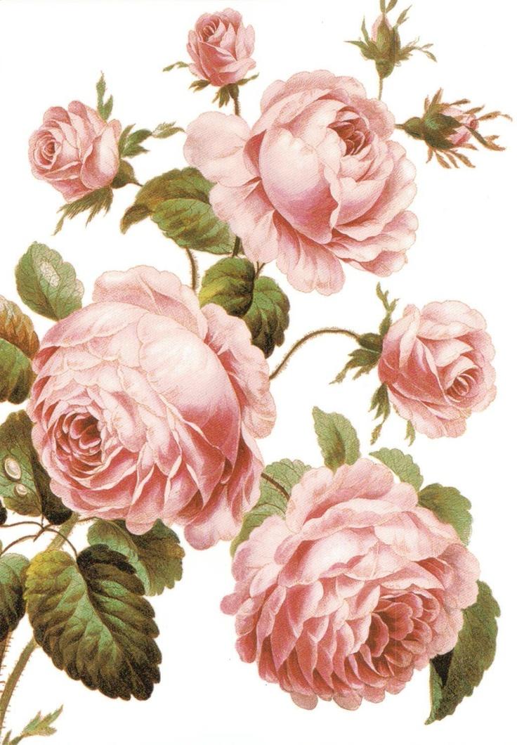 картинки цветочные винтажные в картинках особенности винтов