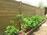 Palissade bois bordure jardin