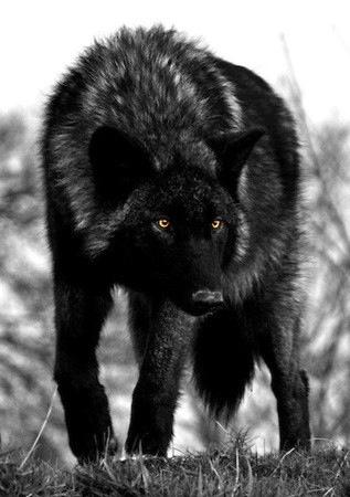Rain Stone Quarantine, Female alpha of Rising Storm, Broken Howl, Series of the Wolves
